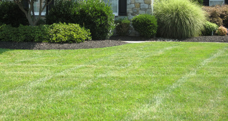 Professional Lawn Care Services North Virginia - Example Of A Well Cared For Lawn Area.