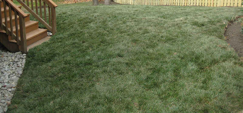 Overseeding Of A Residential Lawn