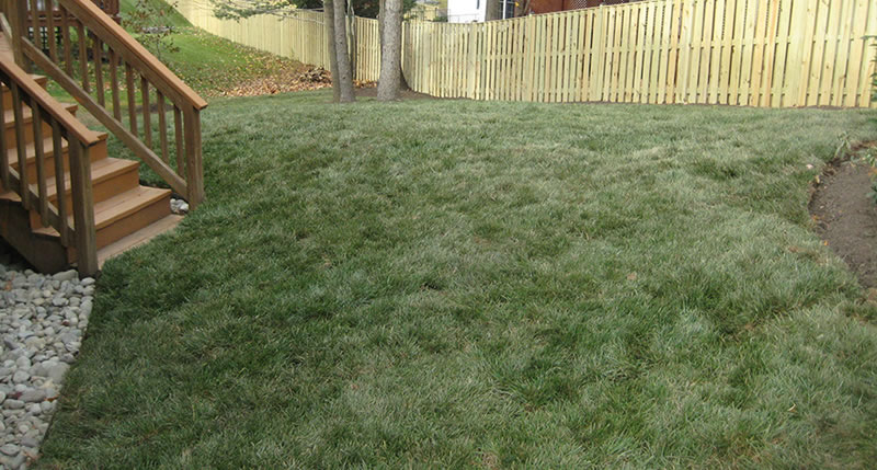 New Lawn Installation Using Sod Or Seed